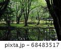 静かな林の中と池 68483517
