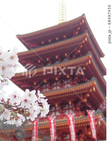 土方歳三の菩提寺でもある高幡不動尊金剛寺の五重の塔と桜 68497450
