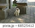 公園の木陰にたたずむ野良猫 68525412