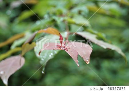 茨城県鹿嶋市の林道の朝露のある風景 68527875