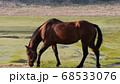 馬が草を食べる阿蘇草千里の朝 68533076
