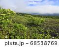 北海道の樽前山から望むウコンウツギとエゾイソツツジと支笏湖 68538769