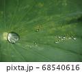 蓮の葉の上の水滴 68540616