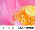 蓮の花の雄蕊と花托の上の雌蕊 68540906