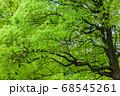 新緑 エコイメージ 68545261