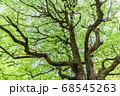 新緑 エコイメージ 68545263