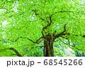 新緑 エコイメージ 68545266