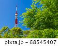 新緑の木立と東京タワー 68545407