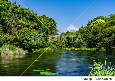 (静岡県)新緑に囲まれた柿田川湧水と富士山 68558076