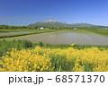 北海道倶知安町の菜の花とニセコ連峰 68571370