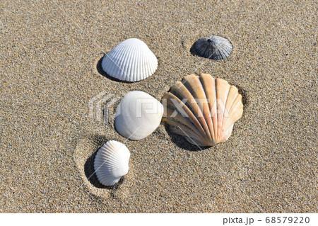 砂浜のオブジェ~野球ボールと貝殻~ 68579220