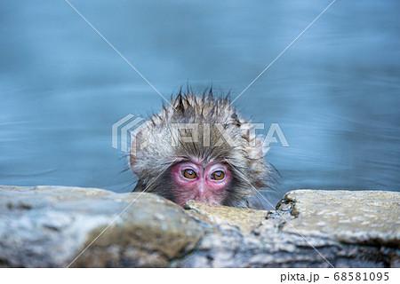 温泉に浸かるニホンザル 冬の地獄谷の猿 68581095