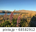 青空の下、湖の側に咲くルピナスの花 68582912