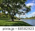 川沿いの木と木陰 68582923