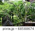 滋賀県 西教寺 庭園 68588674