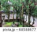 滋賀県 西教寺 庭園 68588677
