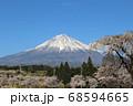 桜と雪化粧をした富士山 左右対称の美しい表富士 68594665