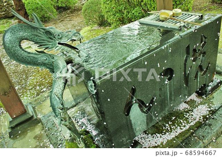 桜の花びらが流れる清らかな洗心 お寺の境内にある手洗い場 68594667
