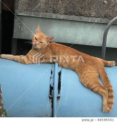 青い配管の上でダラダラのんびりくつろぐ下町の野良猫 68596501