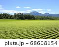 北海道倶知安町の蕎麦畑とニセコ連峰 68608154