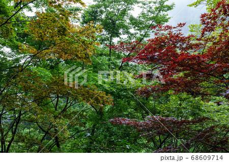 御嶽神社参道の三色に染まった木々 68609714