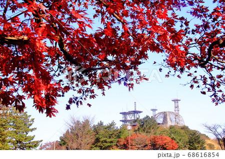 六甲山(神戸市灘区)山頂付近の紅葉 68616854