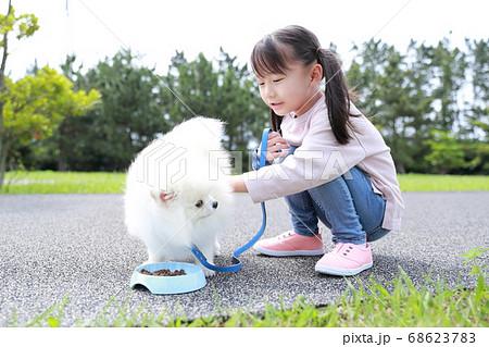 公園で女の子が愛犬ポメラニアンと散歩にご飯をあげる 68623783