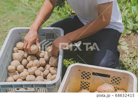 じゃがいも 収穫 農家 68632415