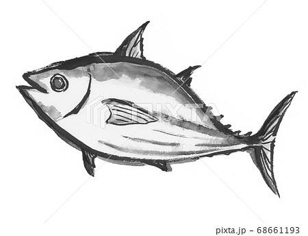 墨で描いた鰹のイラスト 68661193