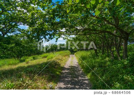 物見岩から八島湿原へ向かう登山道(霧ヶ峰・車山) 68664506