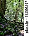 大きな木の根が生え広がっている所に、木漏れ日が味わい深く差し込んでいる風景 68666847