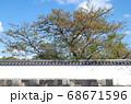 萩武家屋敷の塀と桜の木の景色 68671596