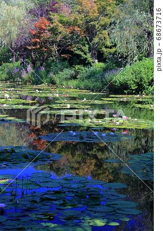 絵画のような睡蓮の庭 夏(高知県) 68673716
