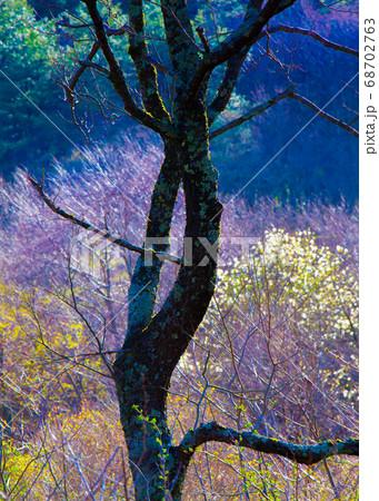 湿原に春が来ました。彩りが鮮やかになっています。広島県 68702763