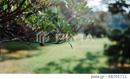 熱中症にご注意を。 日陰を作る木々たち 68705711