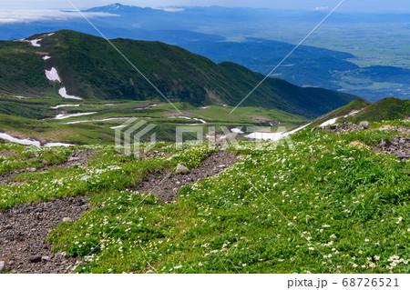 ハクサンイチゲとチングルマの咲く鳥海山の登山道 68726521