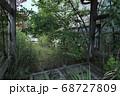 双葉郡双葉町 放置された車と伸び放題の樹木 68727809
