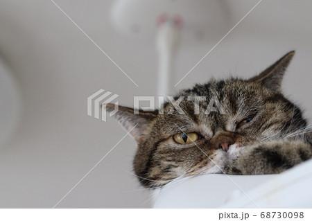 リラックスして目を細めて見下ろす猫のアメリカンショートヘアブラウンタビー 68730098