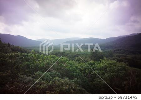 西表島の仲間川沿いのマングローブ林 68731445