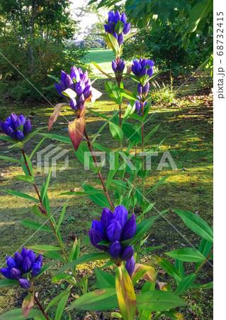 秋晴れの北海道 六花の森に咲く花 68732415