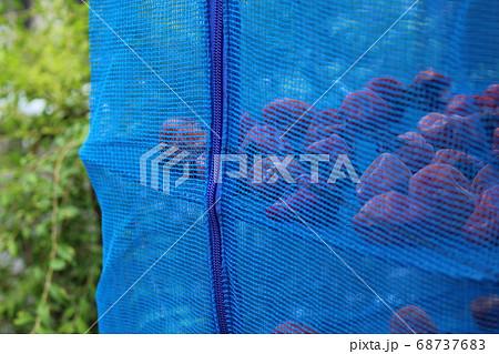 梅干し作りで網に入れて天日干し 68737683