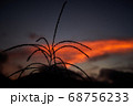 夕焼けとススキ 68756233