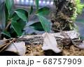 ライトに照らされたジャングルのイメージ素材 68757909