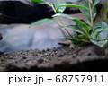 ローアングルから見た土と葉っぱ 68757911