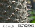 サボテンの棘 68762593