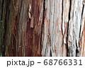 木 自然 木肌 神秘的 68766331