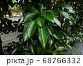 木 自然 木肌 神秘的 68766332