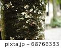 木 自然 木肌 神秘的 68766333