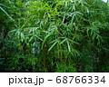 木 自然 木肌 神秘的 68766334
