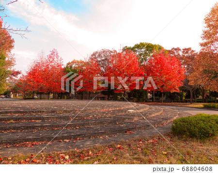 宝ヶ池公園のプラタナス、朝の紅葉 68804608